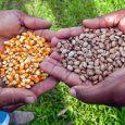 A Prefeitura de Catas Altas distribuiu em 2017 quase dois mil pacotes de sementes para a população através do programa Semeando Sustentabilidade. Para isso, foram investidos cerca de R$ 8 […]