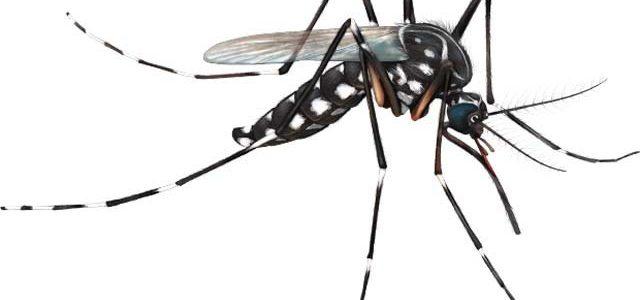 A Secretaria de Estado de Saúde confirmou em novo boletim informativo, divulgado na tarde de terça-feira (16), a segunda morte por dengue em João Monlevade. Há ainda um óbito suspeito […]